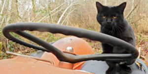animal care sanctuary cat donates tractor