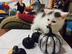 Halloween Kitten Yoga in East Smithfield