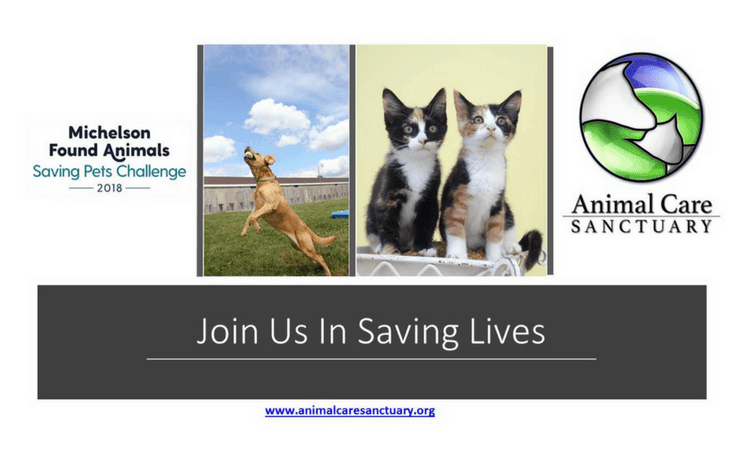 Saving Pets Challenge animal care sanctuary
