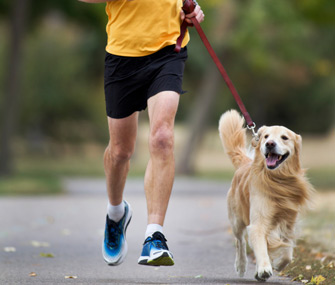 The Importance of Doggy Exercise