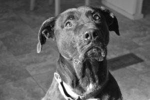 Problem Solving Workshop, Solutions for Dog Behavior, Training, and Performance @ Cornell Cooperative Extension of Broome County | Binghamton | New York | United States