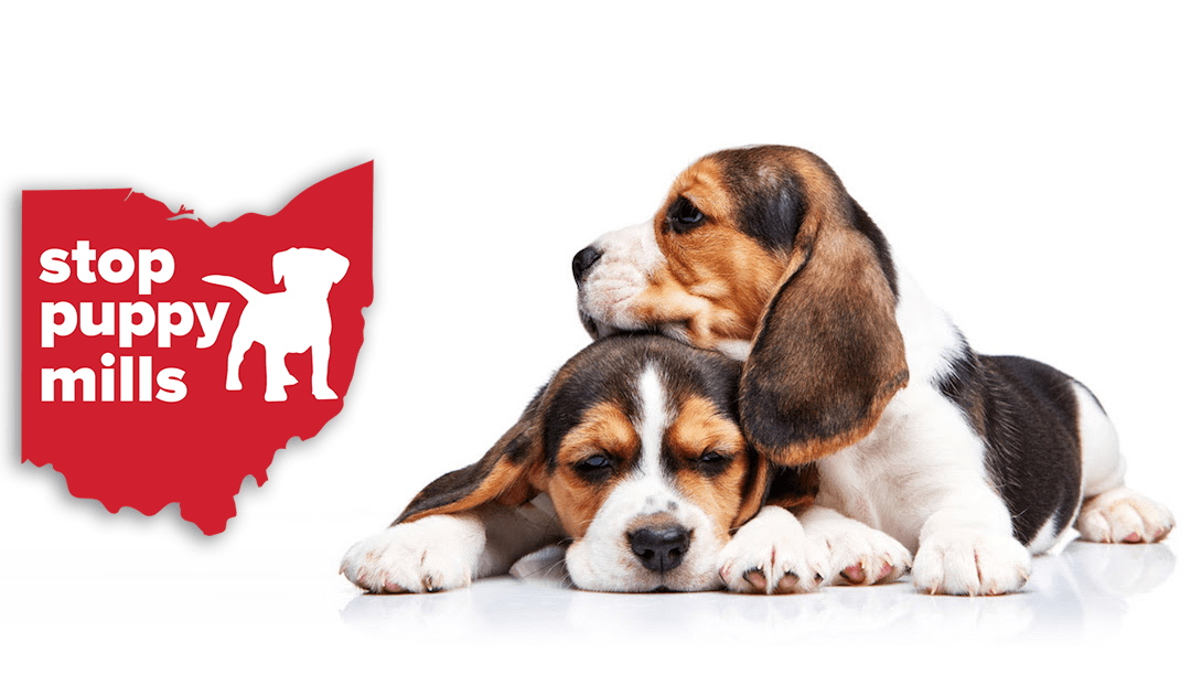 Use Your Voice – Help Combat Puppy Mills With PA Puppy