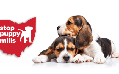 Use Your Voice – Help Combat Puppy Mills With PA Puppy Retail Sales Bill