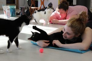 Cat Yoga @ Animal Care Sanctuary  East Smithfield | Milan | Pennsylvania | United States
