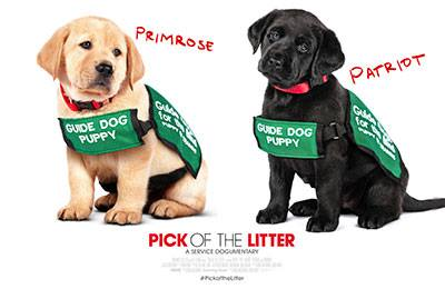pick of the litter event