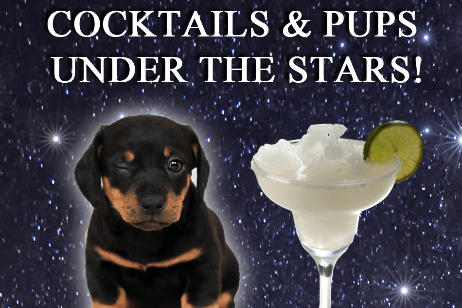 Cocktails & Pups Under the Stars