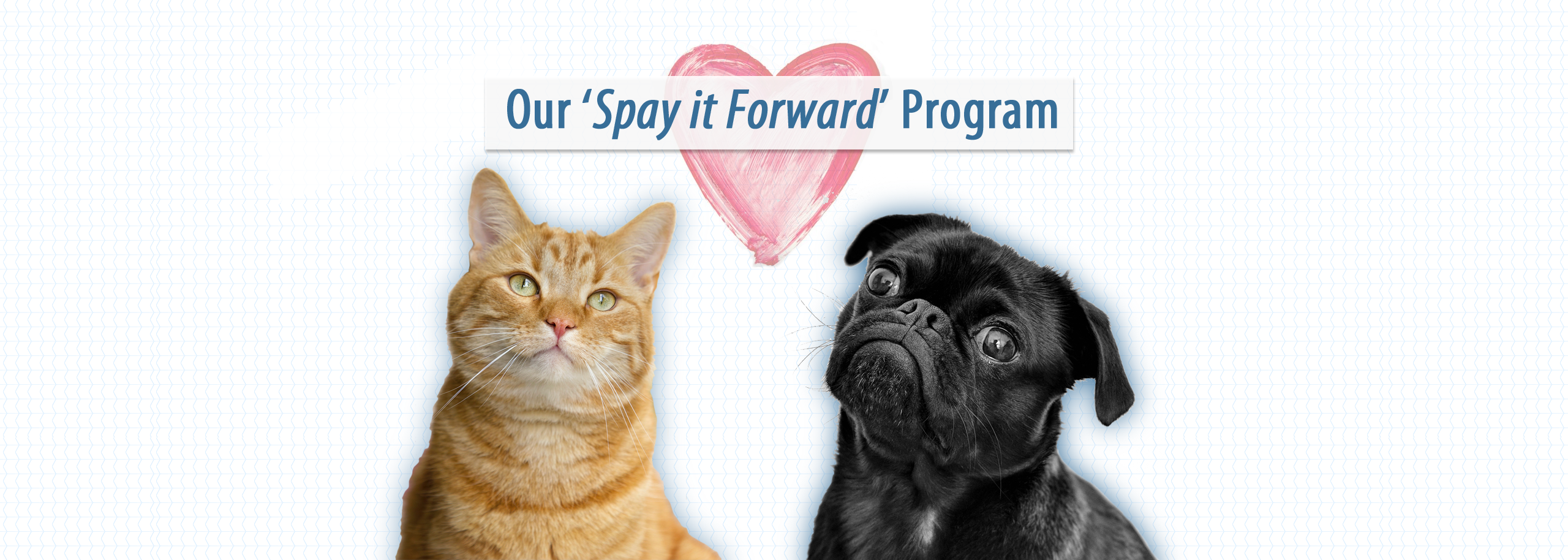 Spay it Forward at Animal Care Sanctuary