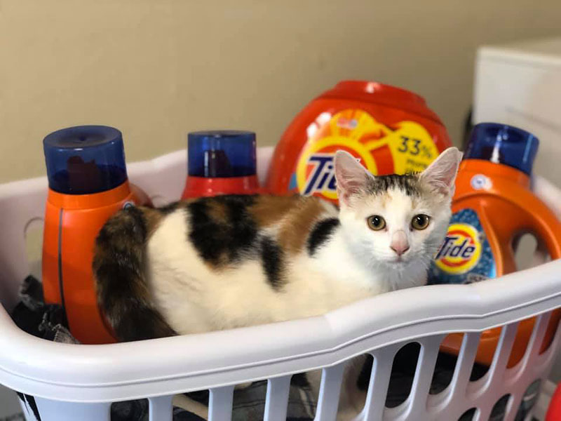 kitty in a laundry basket at animal care sanctuary in east smithfield pennsylvania