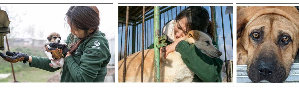 Korean Dogs Rescued at ACS