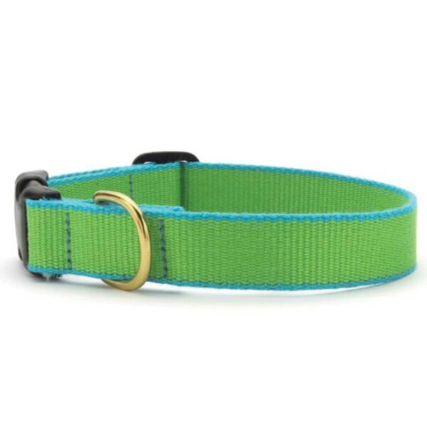 Green Market Lime and Aqua Dog Collar available at Animal Care Sanctuary