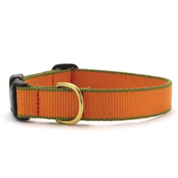 Green Market Tangerine and Pine Green Dog Collar available at Animal Care Sanctuary