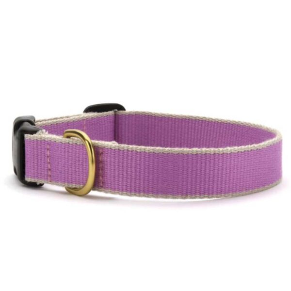 Lilac and Grey Dog Collar at Animal Care Sanctuary