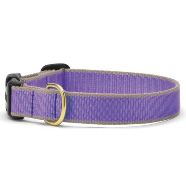 Purple and Gray Collar available at Animal Care Sanctuary