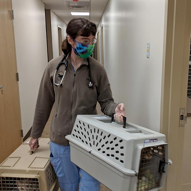 Cats entering the new clinic at Animal Care Sanctuary in East Smithfield, Pennsylvania