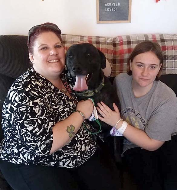 Lab being adopted at Animal Care Sanctuary in East Smithfield, Pennsylvania