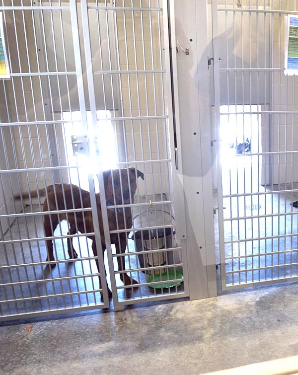 Dog in the new Kennels at Animal Care Sanctuary in East Smithfield, PA