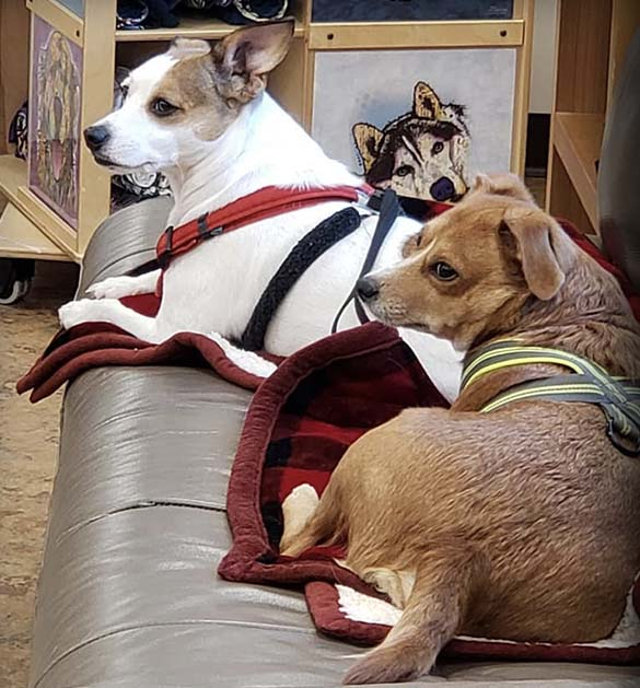 Two Pooches adopted at Animal Care Sanctuary in East Smithfield, PA