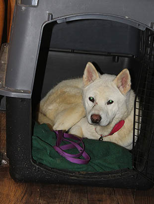 Kevin in his crate
